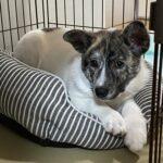 保護犬トライアル初日、初めて犬を飼う私では実際難しいのか?