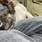里親トライアル期間終了、保護犬を迎えることは苦労する?